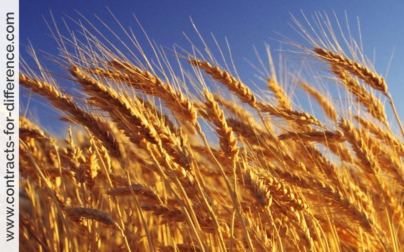 Wheat CFDs